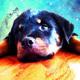 Sharon Cummings - Rottie Puppy by Sharon Cummings