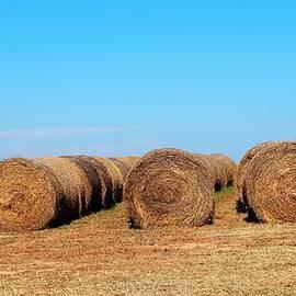 Cynthia Guinn - Round Bales Of Hay