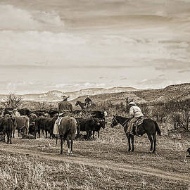Priscilla Burgers - Rounding Up Cattle In Cornville Arizona sepia