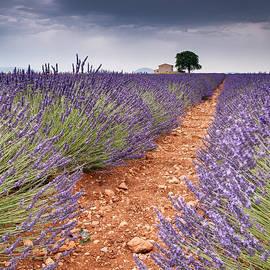 Michael Blanchette - Row of Lavender