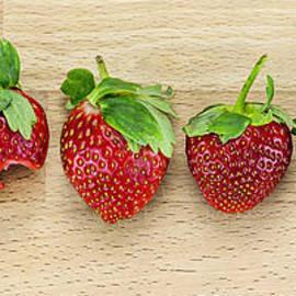 Svetlana Sewell - Row of Strawberries