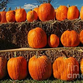 Rows Of Pumpkins