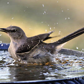 Rub-a-dub-dub Mockingbird