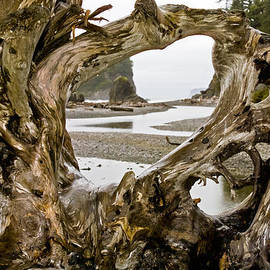 Greg Reed - Ruby Beach Driftwood #3