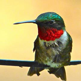 Jean Doepkens Wright - Ruby-Throated Hummingbird