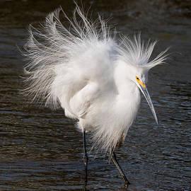 Kathleen Bishop - Ruffled Feathers