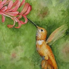 Catherine Howley - Rufous Hummingbird