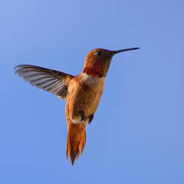 Rufus In Flight