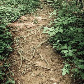 Alexey Stiop - Rugged trail