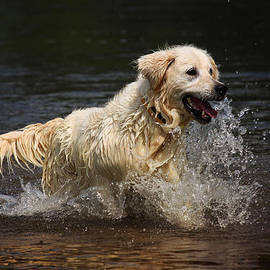 Ludek Sagi Lukac - Run In River