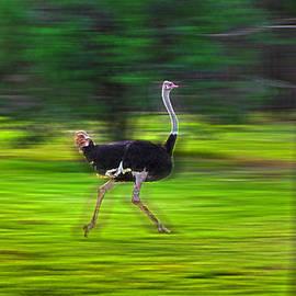 Miroslava Jurcik - Run Ostrich