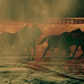 Rick Todaro - Run