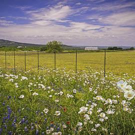 Lynn Bauer - Rural Beauty in Spring - Fine Art by Lynn Bauer