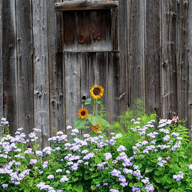 Bill  Wakeley - Rustic Barnwood Sunflower