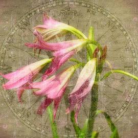 Larry Bishop - Rustic Lilies