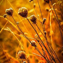 Brian Stevens - Rustic Weeds