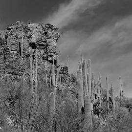 Ed  Cheremet - Sabino Canyon in BnW
