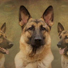 Sandy Keeton - Sable German Shepherd Collage