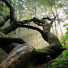 Dustin  LeFevre - Sacred Forest