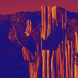 Carolina Liechtenstein - Saguaro Bones Speak