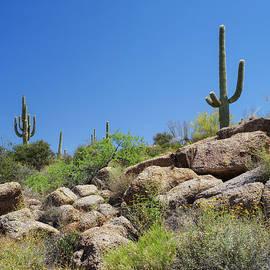 Marianne Campolongo - Saguaro Cacti Arizona Desert