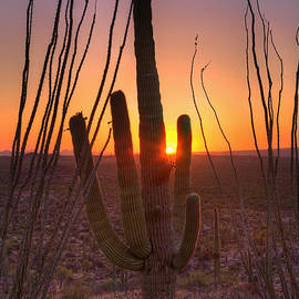 Eddie Yerkish - Saguaro and Ocotillo at Sunset