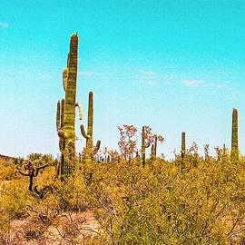 Bob and Nadine Johnston - Saguaro Cactus in Organ Pipe Monument
