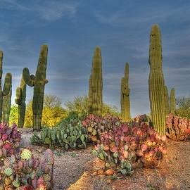 Tam Ryan - Saguaro Fantasy