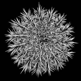Douglas Taylor - Saguaro Mandala In Shades Of Grey