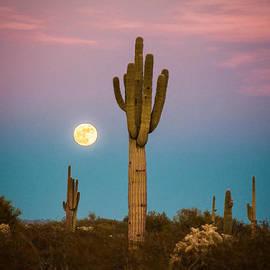 Erica Hanks - Saguaro Moonrise