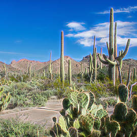 Barbara Manis - Saguaro National Park