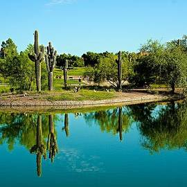 Barbara Zahno - Saguaro Reflections