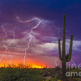 Nicholas  Pappagallo Jr - Saguaro Stormy Sunset II