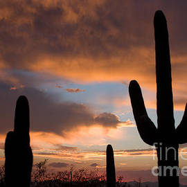 Chris Scroggins - Saguaro Sunset