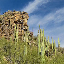 Ed  Cheremet - Saguaros at Sabino Canyon