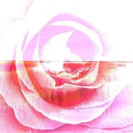 Annie Zeno - Salt Marsh Seascape And Rose