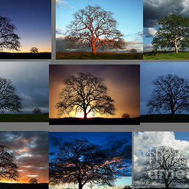 Robert Woodward - Same Tree Many Skies Montage