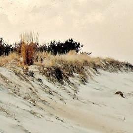 Kim Bemis - Sand Dunes at Penny Beach