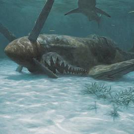 Randall Scott - Sand Shark
