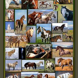 Lourie Zipf - Sand Wash Basin Wild Horses