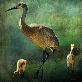 Barbara Chichester - Sandhill and Chicks