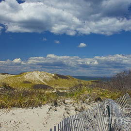 Amazing Jules - Sandy Neck Beach