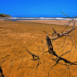 Leyla Ismet - Sandy Red Beach with Branch