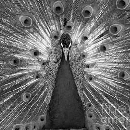 Ann Horn - Sans Color