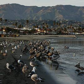 Georgia Mizuleva - Santa Barbara Beach Crowd