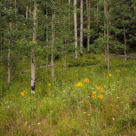 Brian Harig - Santa Fe National Forest Aspen Series 1 - New Mexico