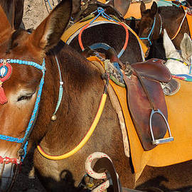 Colette V Hera  Guggenheim  - Santorini Donkeys Ready for Work