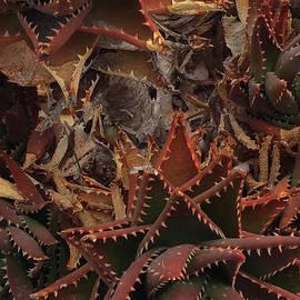 Colette V Hera  Guggenheim  - Santorini Island Cactus Greece