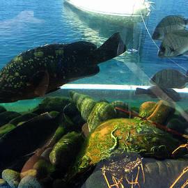Colette V Hera  Guggenheim  - Santorini Island  Fish Greece
