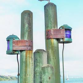 John King - Sausalito Seagull